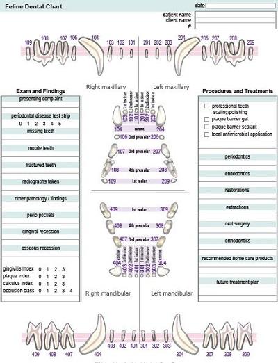 Dental Chart Templates