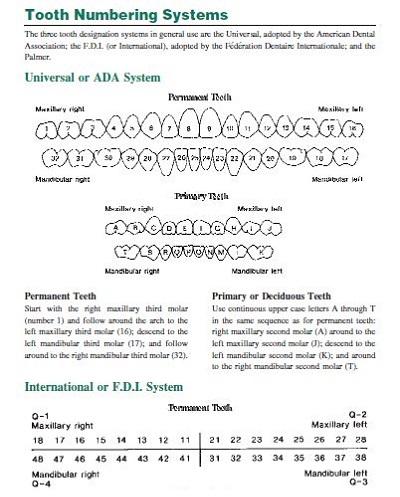 dental record template